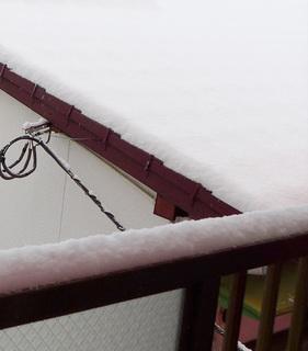 2021jan09 snow.JPG