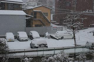 雪2016Jan24 (1).JPG