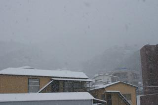 雪2016Jan24 (2).JPG