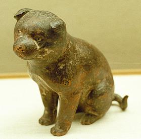 高山寺 子犬Image6.jpg